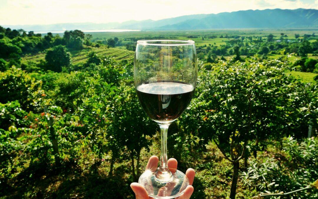 Cavas y Museo del Vino